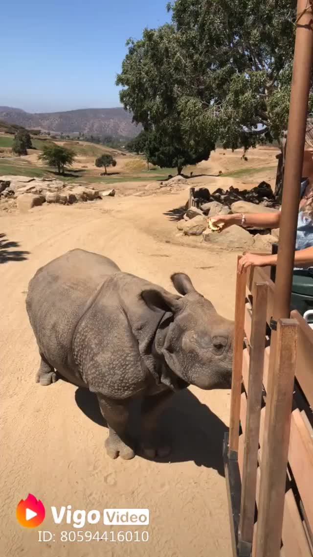 Watch and share Rhinoceros GIFs and Rhino GIFs by LimeLights  on Gfycat