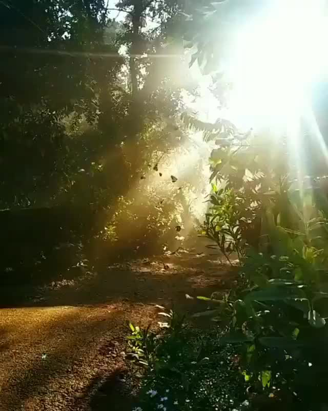 Watch and share Butterflies In The Sun GIFs by dmar082 on Gfycat
