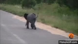Watch and share Elephant Trunk GIFs on Gfycat