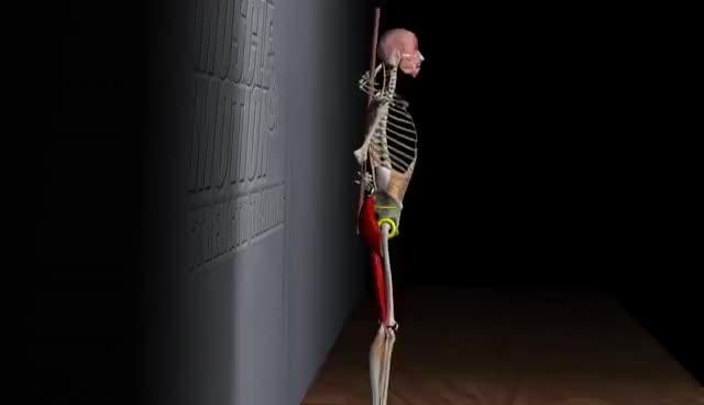 Watch and share The Hip Hinge Anatomy GIFs on Gfycat