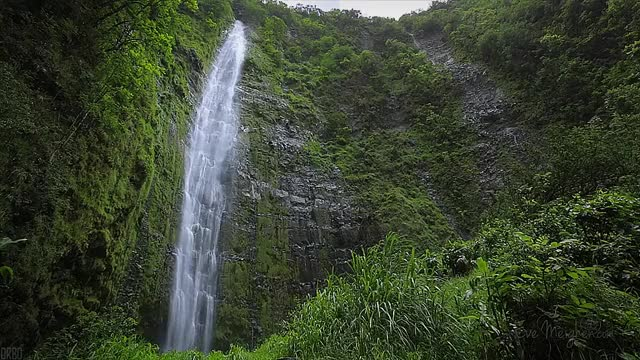 Watch and share Waimoku Falls, Maui. : EarthPornGifs GIFs on Gfycat