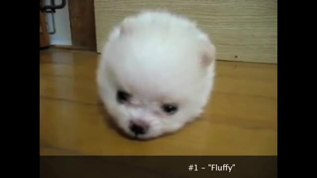 Watch and share Virtual Pets GIFs and Pet Lovers GIFs on Gfycat
