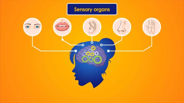 Watch The Nervous System | Educational Videos for Kids GIF on Gfycat. Discover more All Tags, Biology, Central, System, autonomic, brain, cerebellum, creators, nerves, nervous, organs, peripheral, somatic, spine GIFs on Gfycat
