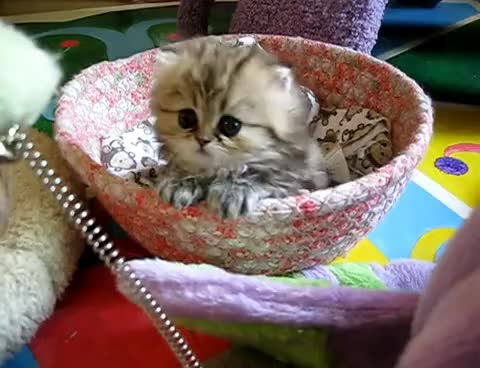 Watch and share Cats GIFs and Cat GIFs on Gfycat