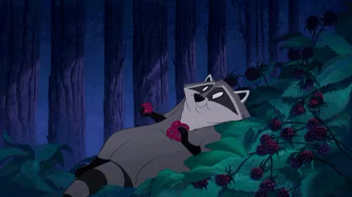 Watch this animal GIF on Gfycat. Discover more animal, animals, cute, disney, eating, food, gif, grunge, indie, meee, pocahontas, raccoon, racoon, raspberries, yum GIFs on Gfycat