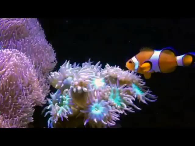 reeftank, Clown steals from his Host Duncan GIFs