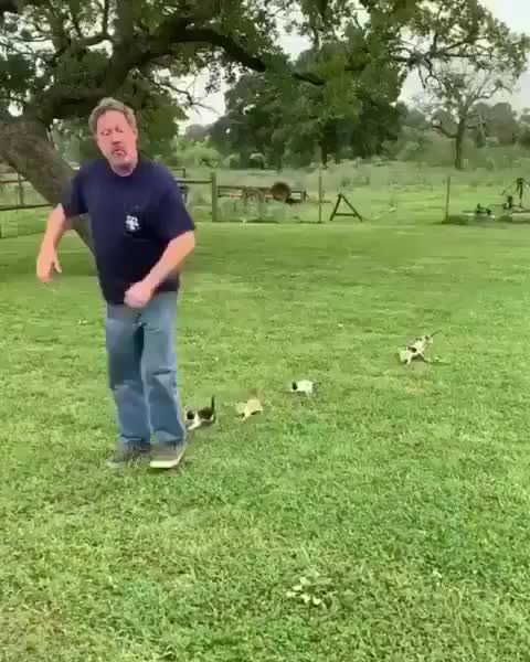 Watch and share Guy Leading His Own Kitten Parade GIFs by tothetenthpower on Gfycat