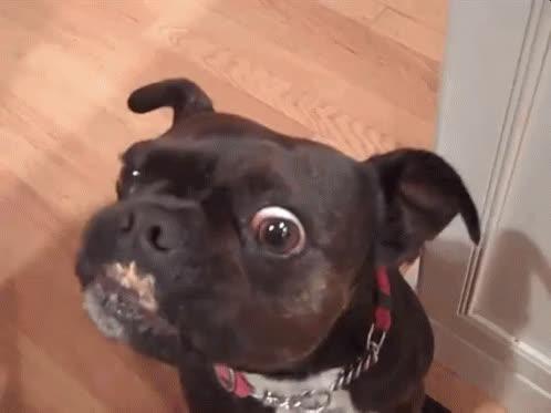 dog, licking, dog licking GIFs