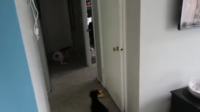 Watch Zoomies GIF by @likkaon on Gfycat. Discover more related GIFs on Gfycat