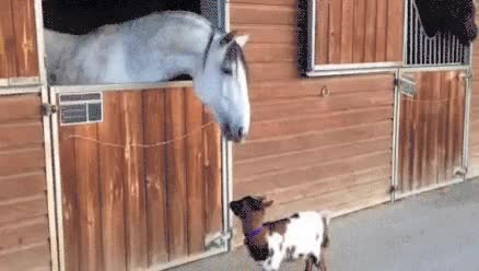 Watch Horse GIF on Gfycat. Discover more related GIFs on Gfycat