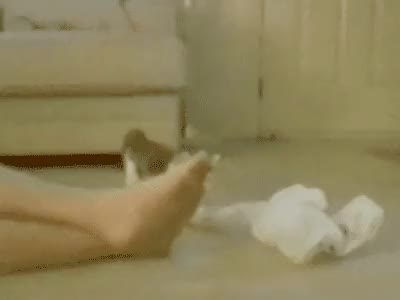 Watch and share Foot Odor (reddit) GIFs on Gfycat