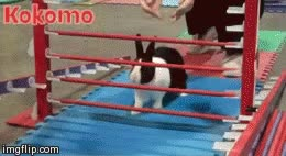 Watch and share Rabbit GIFs by Adrián Briales on Gfycat