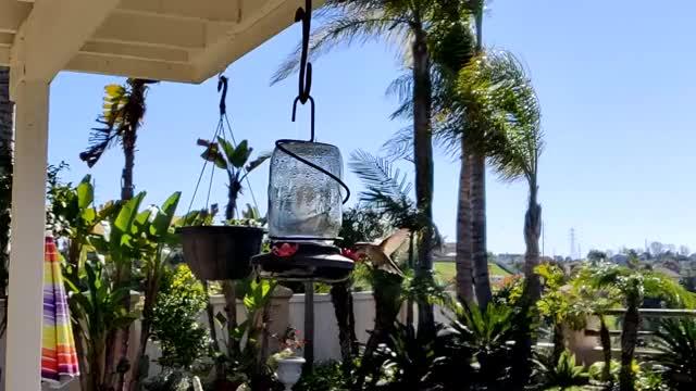 Watch and share Hummingbird GIFs on Gfycat