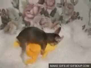 Watch and share Humping Dog GIFs on Gfycat