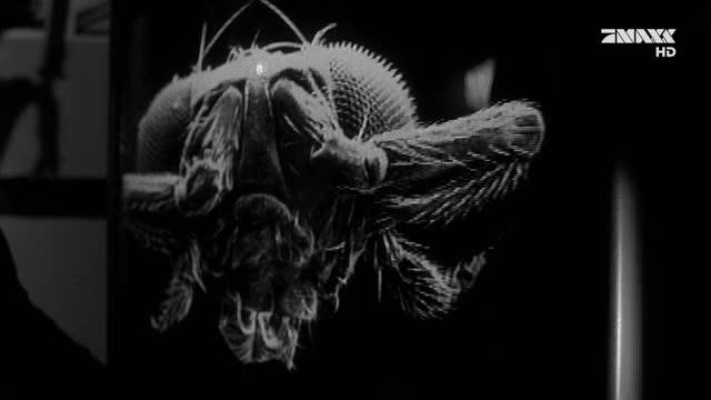 Watch and share Gillian Anderson GIFs by Kamillentee und etwas Honig on Gfycat
