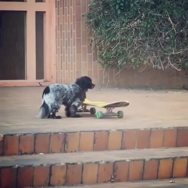 Watch and share Video By Murdythedawg GIFs by gfycat8 on Gfycat