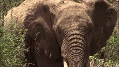 Watch Raise your trunk if you'd like some baby elephant gifs to br GIF on Gfycat. Discover more JoinTheSTAMPede, TakeAStand, WED, animal gif, baby elephant, elephants, gif, world elephant day, worldelephantday GIFs on Gfycat