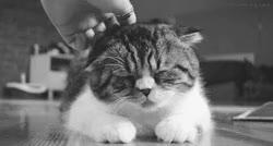 Watch and share Massage GIFs on Gfycat