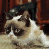 Watch and share Grumpy Cat GIFs on Gfycat