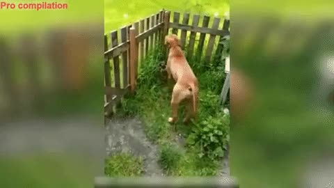 Watch and share Elegant Jump GIFs and Fence GIFs by GlobalSweet on Gfycat