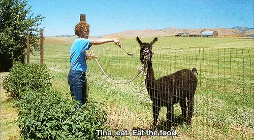 Watch and share Napoleon Dynamite, Tina, Eat, Food, Hungry GIFs on Gfycat