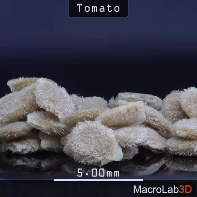 Watch Tomato seeds GIF by MacroLab3D (@macrolab3d) on Gfycat. Discover more 3D, MacroLab3D, macro, seed, tomato, wigglegram GIFs on Gfycat