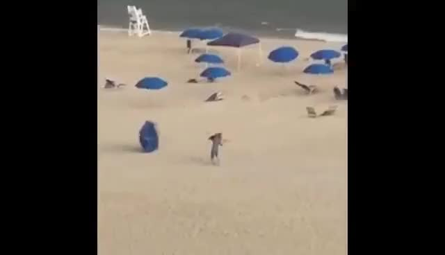 Watch and share Umbrellas Attack Humans On Beach GIFs on Gfycat