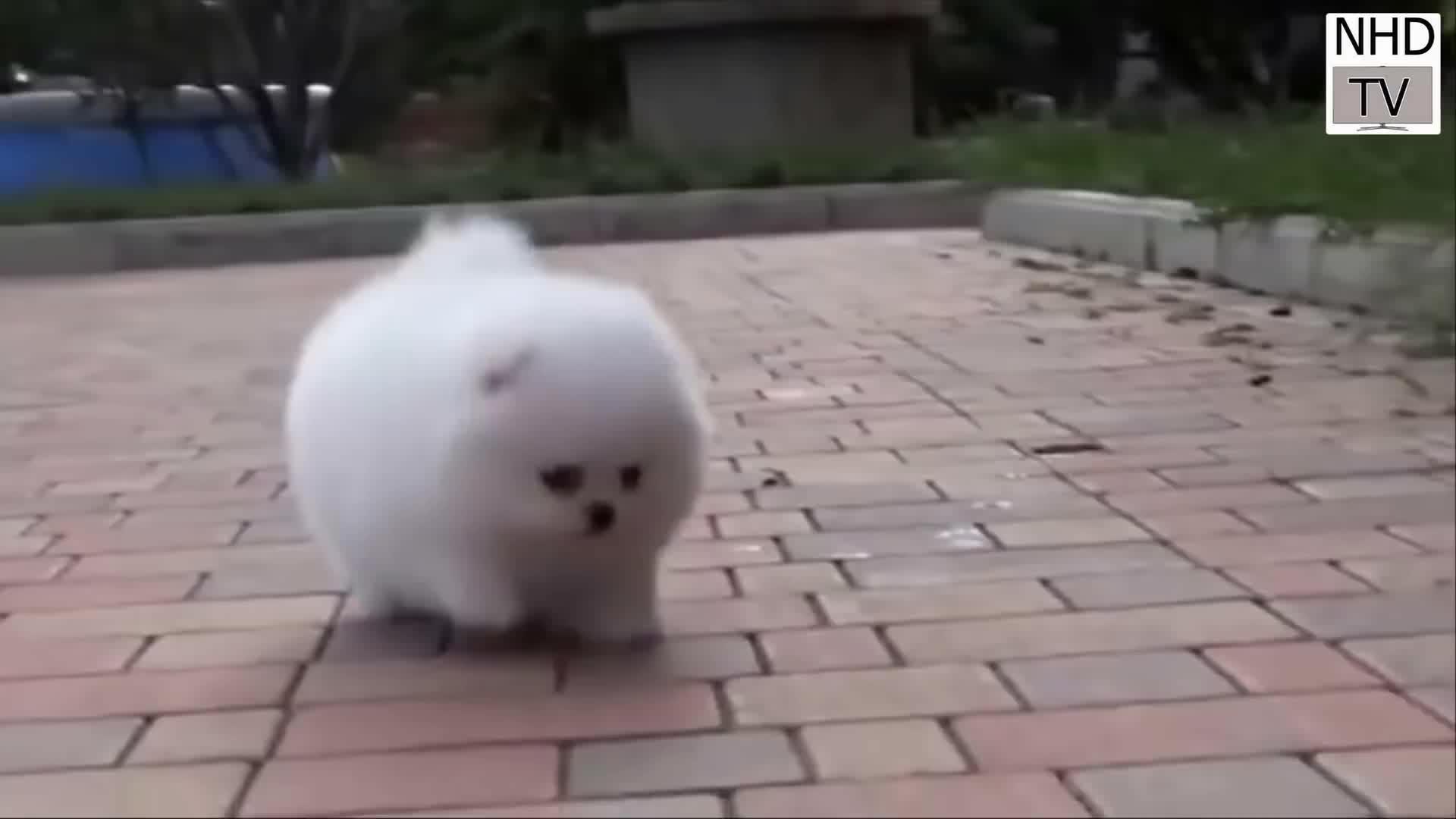 Cutest Dog In Internet Gif By Sachin923 Gfycat