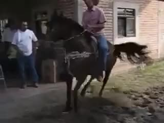 Watch CAVALO DANÇANDO FUNK GIF on Gfycat. Discover more related GIFs on Gfycat