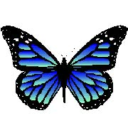Watch and share Butterfly GIFs and Flight GIFs on Gfycat