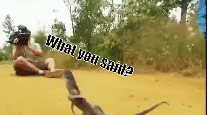 Watch and share [Request Filled] Vicious Lizard Attacks Cameraman (reddit) GIFs on Gfycat