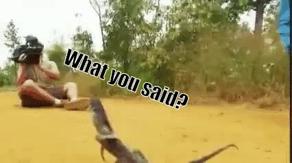 AnimalTextGifs, animaltextgifs, [Request filled] Vicious lizard attacks cameraman (reddit) GIFs