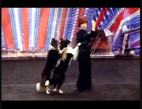 Watch britains got talent GIF on Gfycat. Discover more britains got talent GIFs on Gfycat