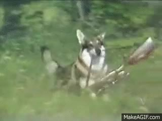 Watch The Littlest Hobo Intro GIF on Gfycat. Discover more related GIFs on Gfycat