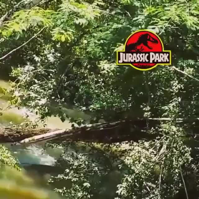 Watch Jurassic Park GIF by @marshal on Gfycat. Discover more maymayfish GIFs on Gfycat