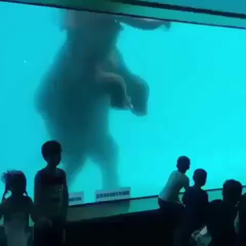 elephant, nature, Elephant swimming GIFs
