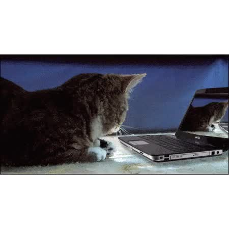 Watch Lil bub GIF on Gfycat. Discover more related GIFs on Gfycat