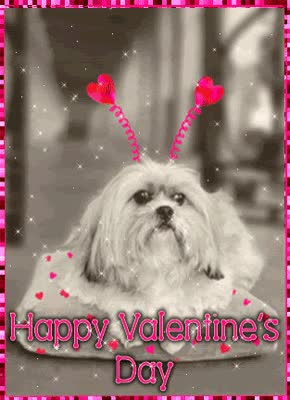 Watch and share Valentines-day-cute-puppy-funny-Gif-image.gif GIFs on Gfycat