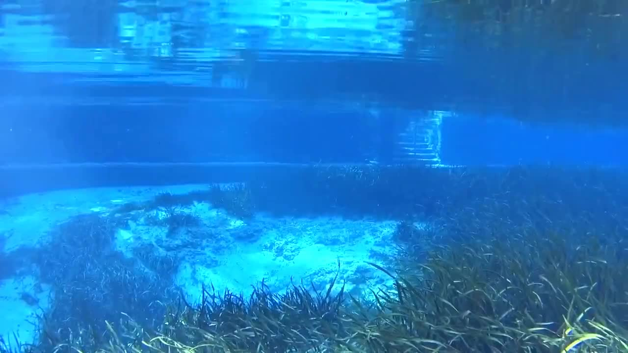 Florida, Scuba, Springs, Wilderness, backcountry, canoe, diving, freedive, freediver, kayak, nature, paddle, paddleboard, travel, vacation, water, Florida Springs GIFs