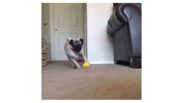 The Dogs Of 2018 Gif Find Make Share Gfycat Gifs