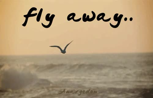 Watch and share Flying Away GIFs on Gfycat