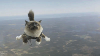 skydiving-cat.gif GIFs