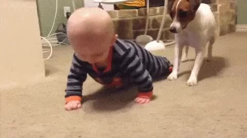 Watch this adorable GIF on Gfycat. Discover more adorable, baby, dog GIFs on Gfycat