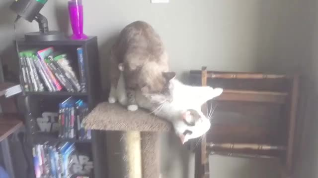 Watch No, This is my castle GIF on Gfycat. Discover more AnimalsBeingJerks GIFs on Gfycat