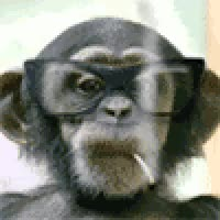 Watch FUNNY MONKEY GIF on Gfycat. Discover more related GIFs on Gfycat