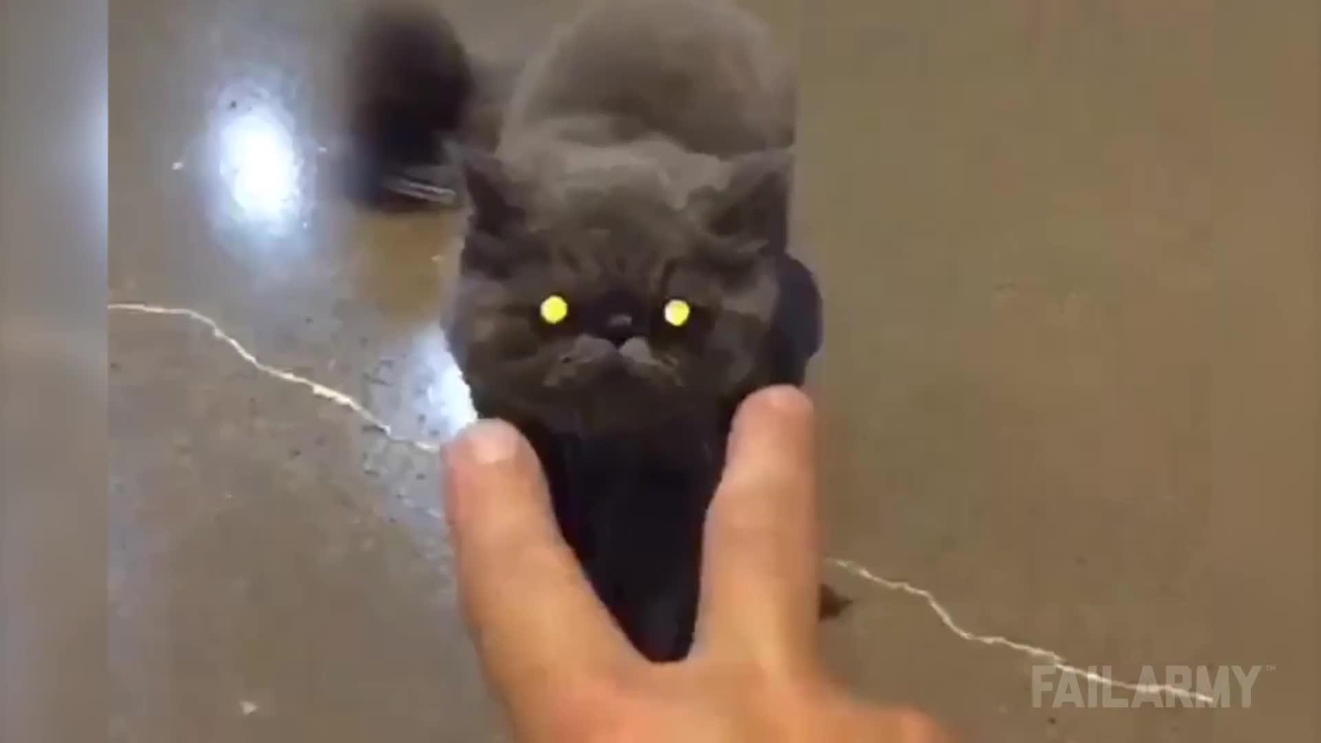 fail, failarmy, fails, Cats Being Jerks Video Compilation (April 2015) || FailArmy GIFs