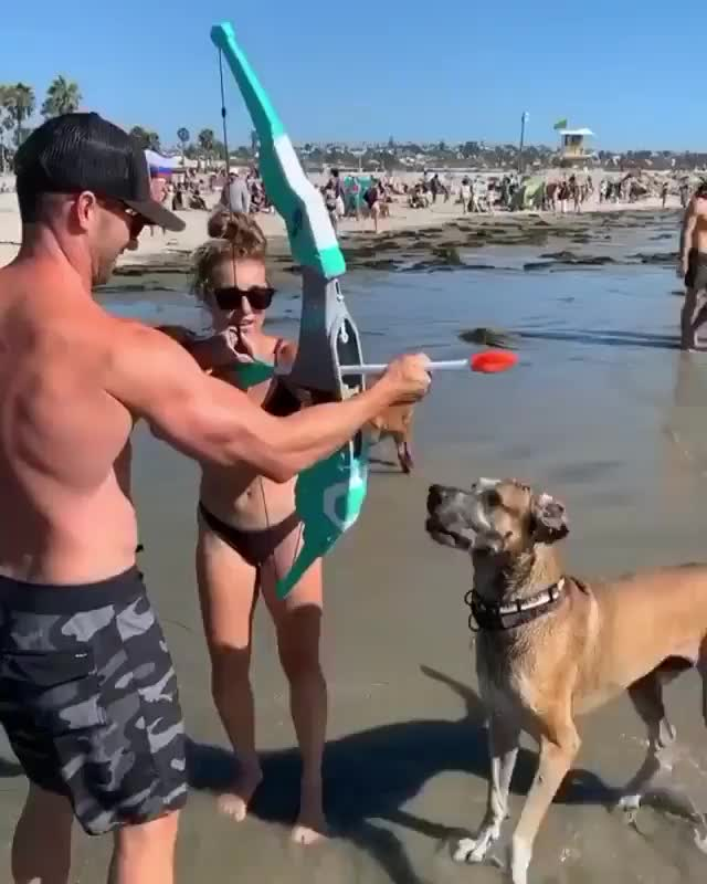 Watch and share Bow And Arrow GIFs and Dog GIFs by 👽 on Gfycat