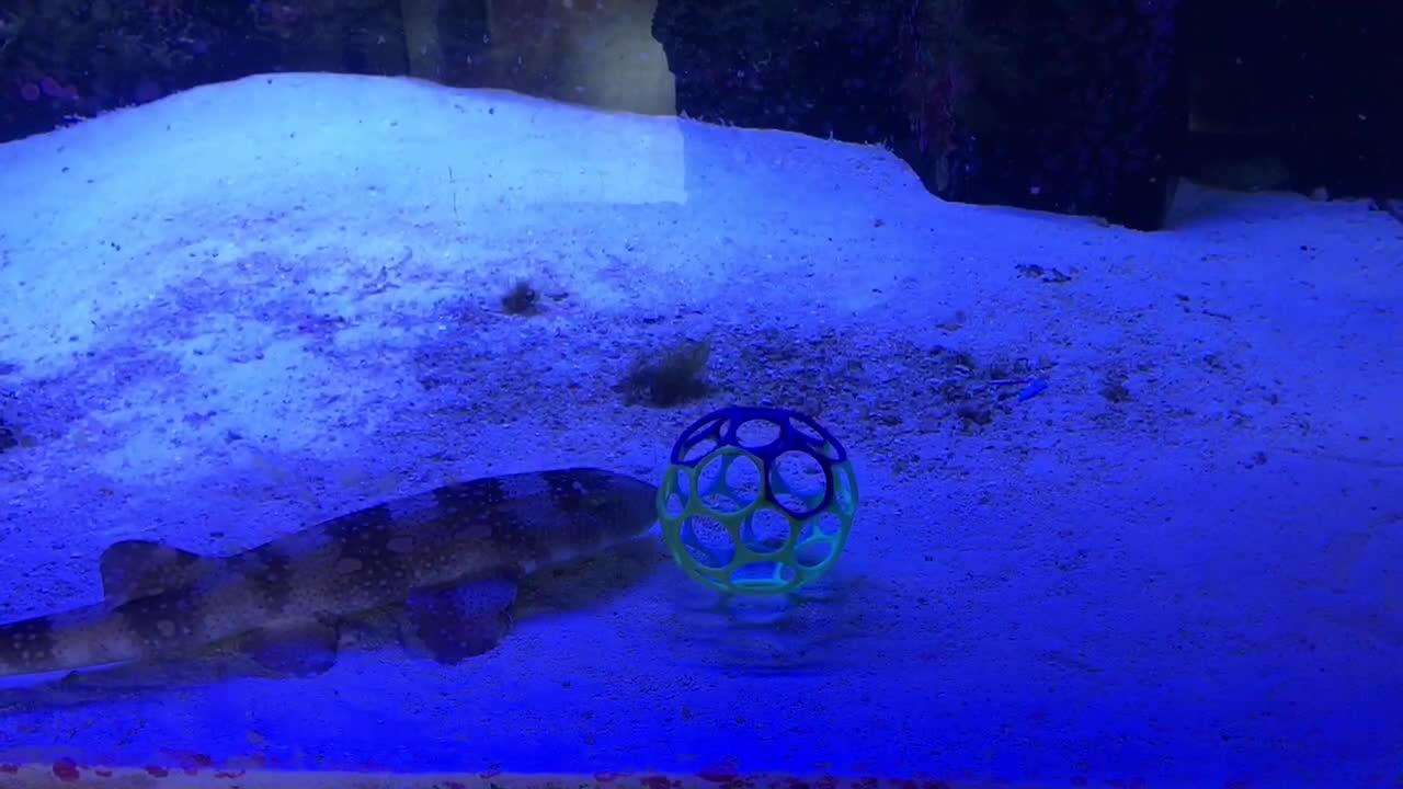 Aquariums, aww, likeus,  GIFs