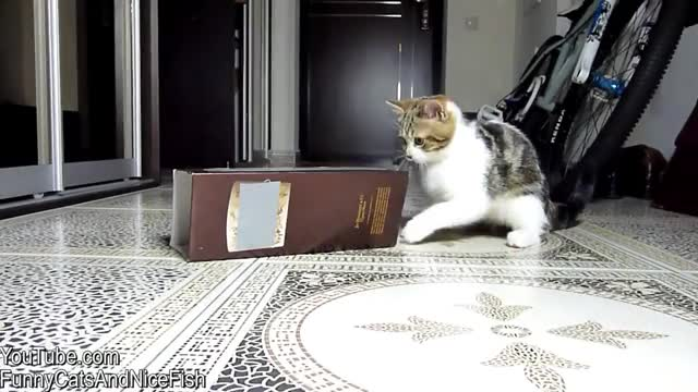Watch and share Cats Like Box GIFs and Cats Love Box GIFs by Agata  on Gfycat