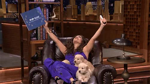 Watch this fallon tonight GIF on Gfycat. Discover more fal pals, fallon tonight, jimmy fallon, puppies, salma hayek, the tonight show, the tonight show starring jimmy fallon, yahoo tv GIFs on Gfycat